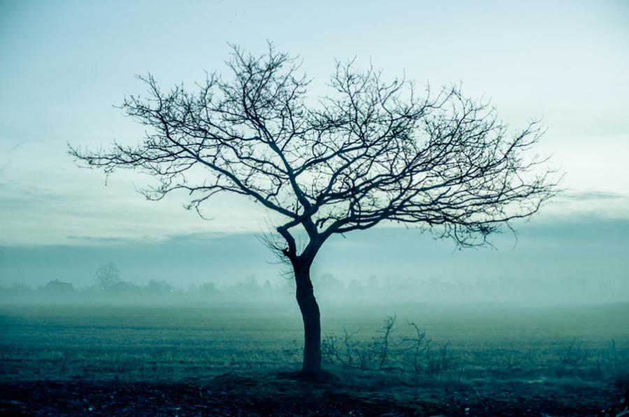 Et træ uden blade står midt på en mark med tåge i baggrunden.
