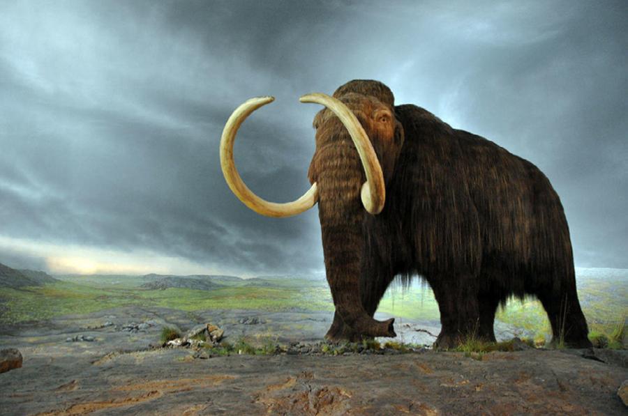 En mammut med store stødtænder står på et stenlandskab med en mørkskyet himmel i baggrunden.
